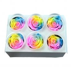 Set di 6 rose criogeniche - Modello arcobaleno 1