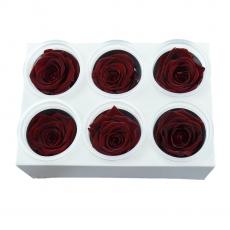 Set di 6 rose criogeniche - rosso scuro