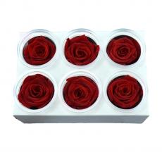 Set di 6 rose criogeniche - rosse