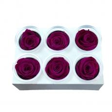 Set di 6 rose criogeniche - Fucsia