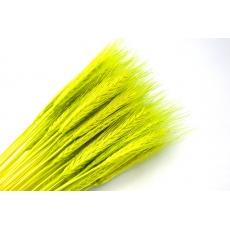 Spezia verde chiaro