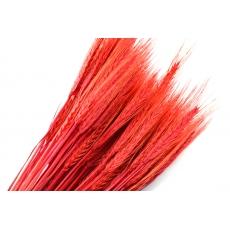 Orecchie rosse