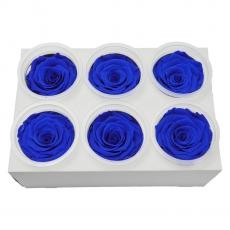 Set di 6 rose criogeniche - blu