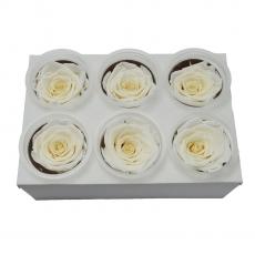 Set di 6 rose criogeniche - bianche