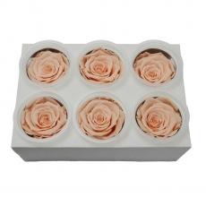 Set di 6 rose criogeniche - Pesca