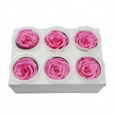 Set di 6 rose criogeniche - rosa