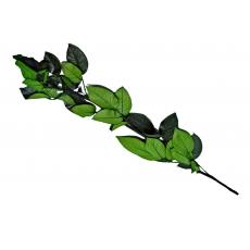 Stelo per rose criogeniche 40 cm