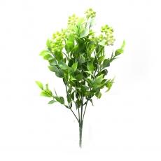 Kalanchoe grande verde con bianco