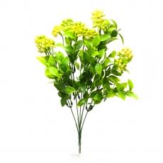 Kalanchoe grande verde con giallo